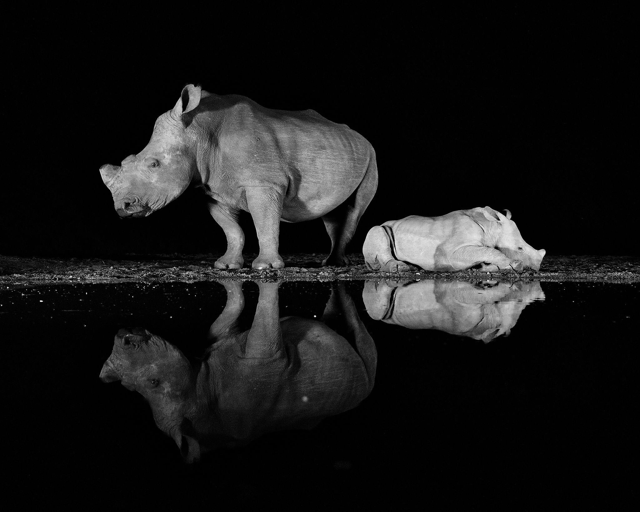A rhino and her calf